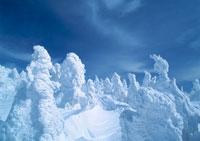 樹氷 11007017144| 写真素材・ストックフォト・画像・イラスト素材|アマナイメージズ
