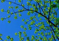 樹木 11007022010| 写真素材・ストックフォト・画像・イラスト素材|アマナイメージズ