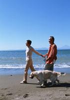 犬の散歩 11007025187| 写真素材・ストックフォト・画像・イラスト素材|アマナイメージズ