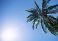 青空とヤシの木 11007025771| 写真素材・ストックフォト・画像・イラスト素材|アマナイメージズ