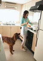 料理シーン 11007026899| 写真素材・ストックフォト・画像・イラスト素材|アマナイメージズ