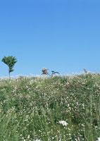 花畑と自転車 11007028555| 写真素材・ストックフォト・画像・イラスト素材|アマナイメージズ