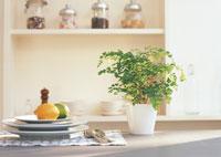 食器とアジアンタムの鉢植え