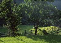 たんぼ 11007029733| 写真素材・ストックフォト・画像・イラスト素材|アマナイメージズ