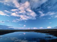 水面に映る綿雲