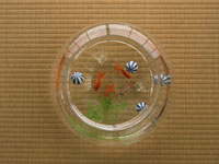 金魚鉢 11007032478| 写真素材・ストックフォト・画像・イラスト素材|アマナイメージズ