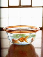 金魚鉢 11007032494| 写真素材・ストックフォト・画像・イラスト素材|アマナイメージズ