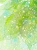 葉と光 11007034272| 写真素材・ストックフォト・画像・イラスト素材|アマナイメージズ