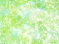 葉と光 11007034273| 写真素材・ストックフォト・画像・イラスト素材|アマナイメージズ