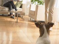 カップルとイヌ 11007034613| 写真素材・ストックフォト・画像・イラスト素材|アマナイメージズ