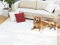 イヌとソファー 11007034648| 写真素材・ストックフォト・画像・イラスト素材|アマナイメージズ