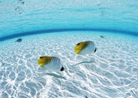 海中の魚 11007058038| 写真素材・ストックフォト・画像・イラスト素材|アマナイメージズ