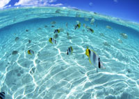 海中の魚 11007058039| 写真素材・ストックフォト・画像・イラスト素材|アマナイメージズ