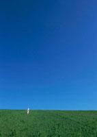 草原 11007059722| 写真素材・ストックフォト・画像・イラスト素材|アマナイメージズ