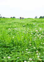 草原 11007059763| 写真素材・ストックフォト・画像・イラスト素材|アマナイメージズ
