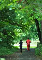 森林 11007059782| 写真素材・ストックフォト・画像・イラスト素材|アマナイメージズ