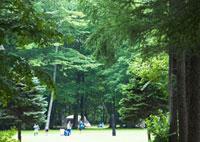森林 11007059826| 写真素材・ストックフォト・画像・イラスト素材|アマナイメージズ