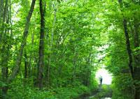 森林 11007059847| 写真素材・ストックフォト・画像・イラスト素材|アマナイメージズ