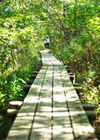 森林 11007059849| 写真素材・ストックフォト・画像・イラスト素材|アマナイメージズ