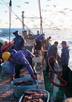 定置網漁 11007060289| 写真素材・ストックフォト・画像・イラスト素材|アマナイメージズ