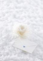 白い花と手紙