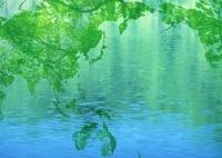 葉で作られた世界地図と水面