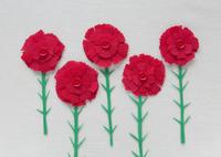 赤いカーネーション 11007064995| 写真素材・ストックフォト・画像・イラスト素材|アマナイメージズ
