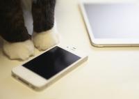 スマートフォンと猫の足 11007065412| 写真素材・ストックフォト・画像・イラスト素材|アマナイメージズ