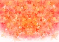 モミジの秋イメージ