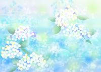 紫陽花 11007065743| 写真素材・ストックフォト・画像・イラスト素材|アマナイメージズ