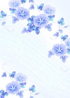 朝顔 11007065748| 写真素材・ストックフォト・画像・イラスト素材|アマナイメージズ