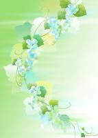 葡萄 11007065752| 写真素材・ストックフォト・画像・イラスト素材|アマナイメージズ