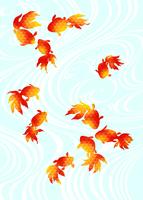 金魚 11007065766| 写真素材・ストックフォト・画像・イラスト素材|アマナイメージズ
