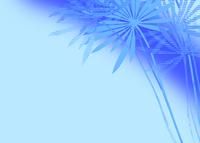 椰子の木 11007065789| 写真素材・ストックフォト・画像・イラスト素材|アマナイメージズ