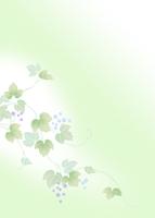 葡萄 11007065802| 写真素材・ストックフォト・画像・イラスト素材|アマナイメージズ
