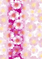 縦ぼかし八重桜