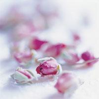 バラ 11010000844  写真素材・ストックフォト・画像・イラスト素材 アマナイメージズ