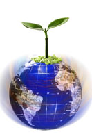 Plant on top of globe