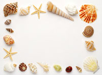 Assorted seashells made into rectangle