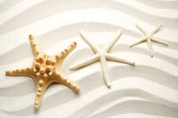Three starfish in a row on sand