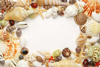 Assorted seashells frame