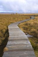 Footpath in flower lake 11010038934| 写真素材・ストックフォト・画像・イラスト素材|アマナイメージズ