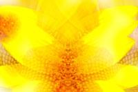 Sunflower's Stamen