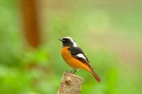 Bird standing on top of tree stump
