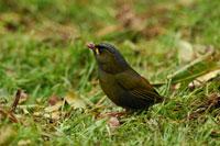 Bird on the grassy ground