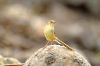 Bird standing on rock