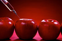 syringe injecting red liquid into apples