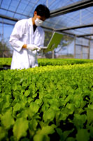 Researcher using laptop in greenhouse