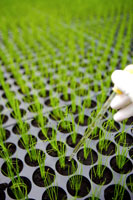 Pipette over seedlings