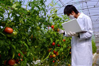 Researcher & genetically modified tomato